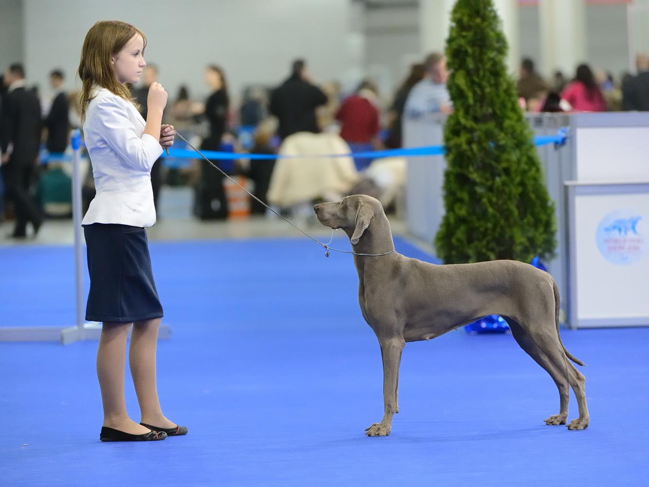 Участница интернациональной выставки собак