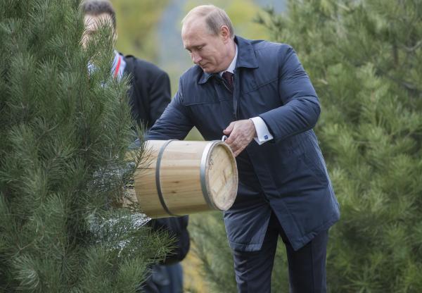 Президент России Владимир Путин на церемонии закладки Аллеи почетных гостей в Пекине