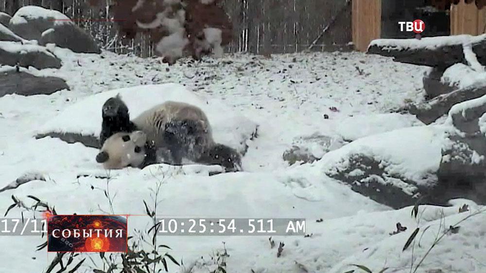 Панда в канадском зоопарке