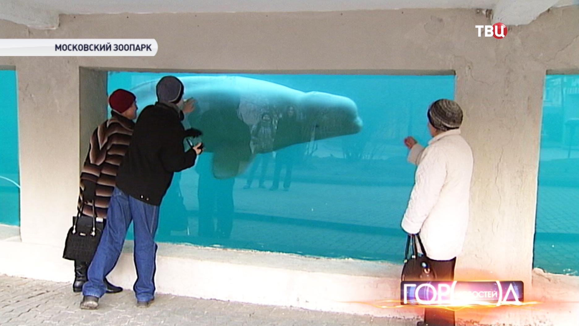 Белуха в Московском зоопарке