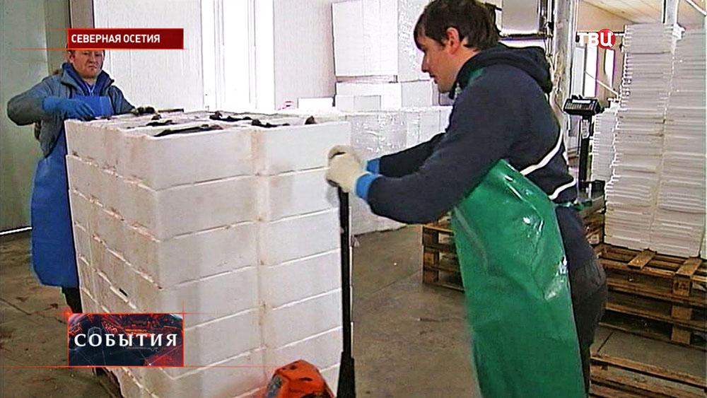 Рыбное производство в Северной Осетии