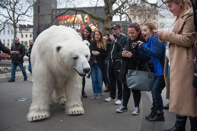 Полярный медведь в центре Лондона