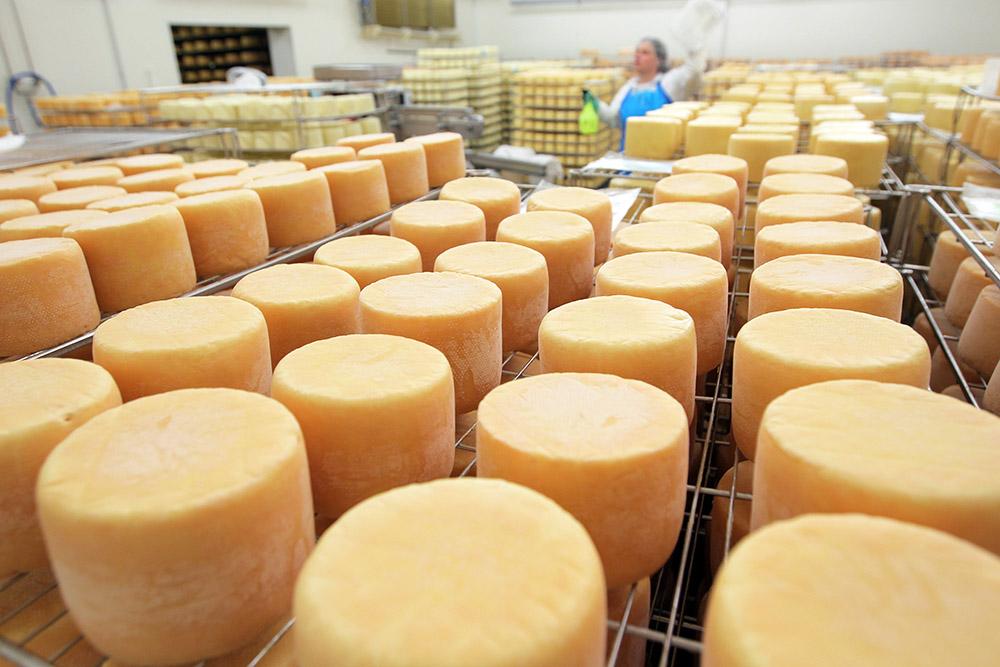 Производство сыра