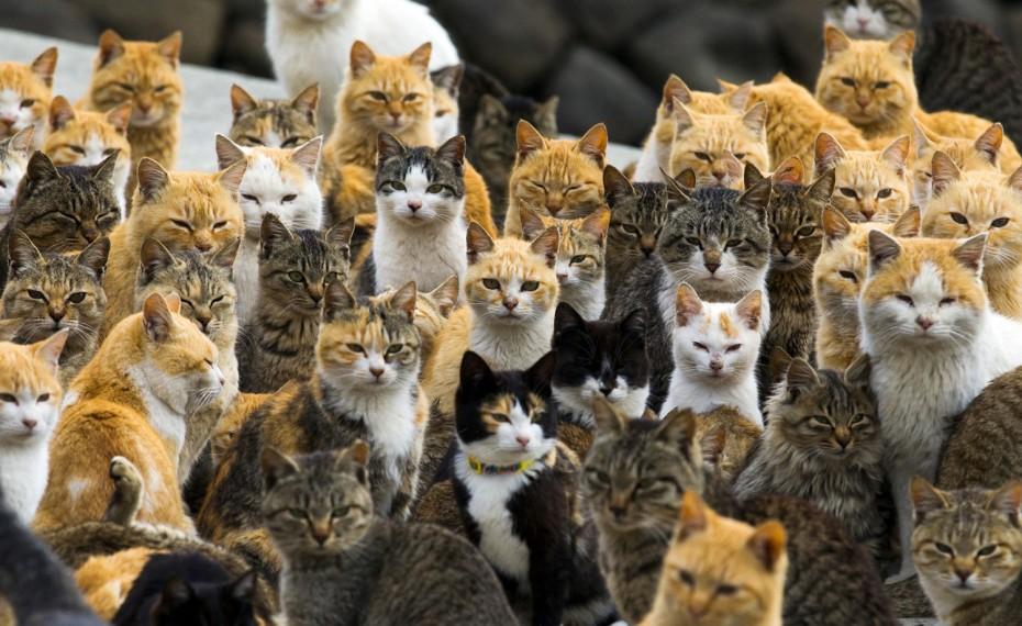 Кошки на японском острове Аосима