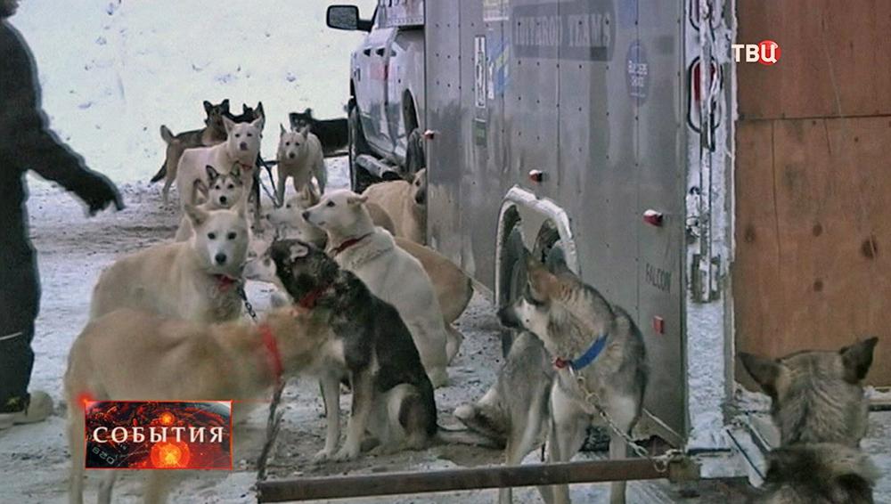 Гонка на собачьих упряжках