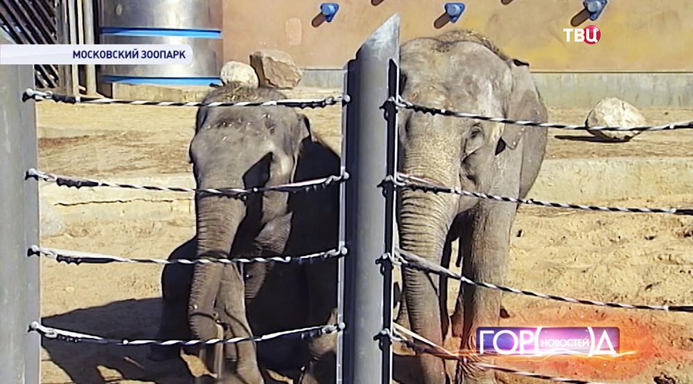 Слоны в Московском зоопарке