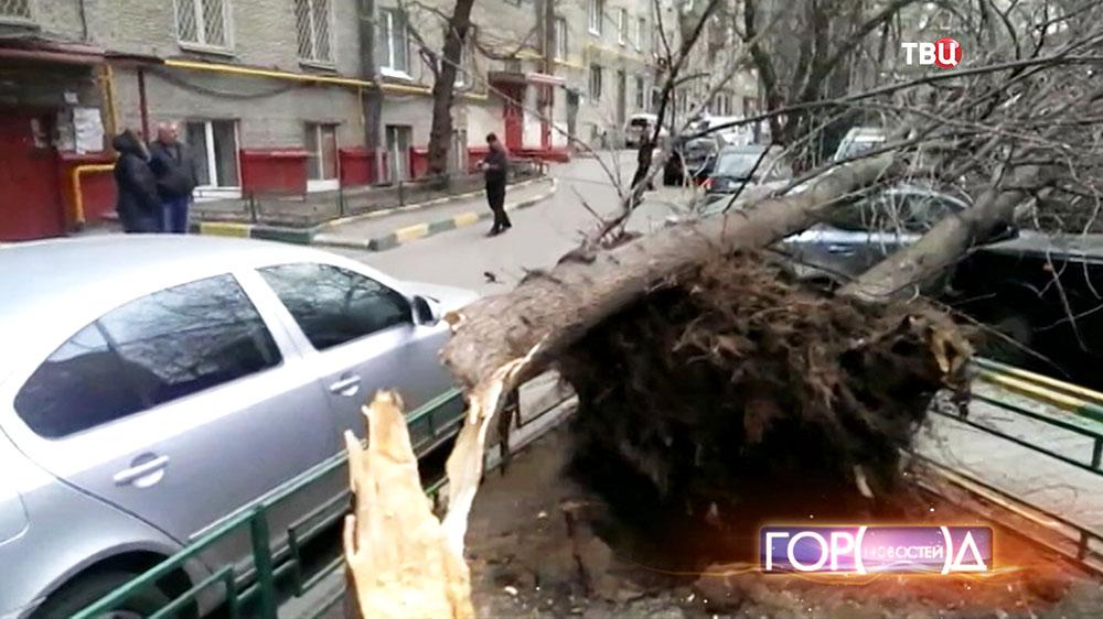 Дерево упавшее на машину в результате штормового ветра