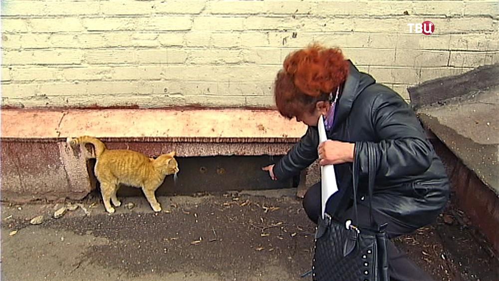 Зоозащитники и кошки