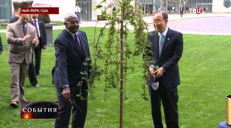 """Церемония высадки """"дерева мира и единства"""" в честь 70-летия окончания Второй Мировой войны"""