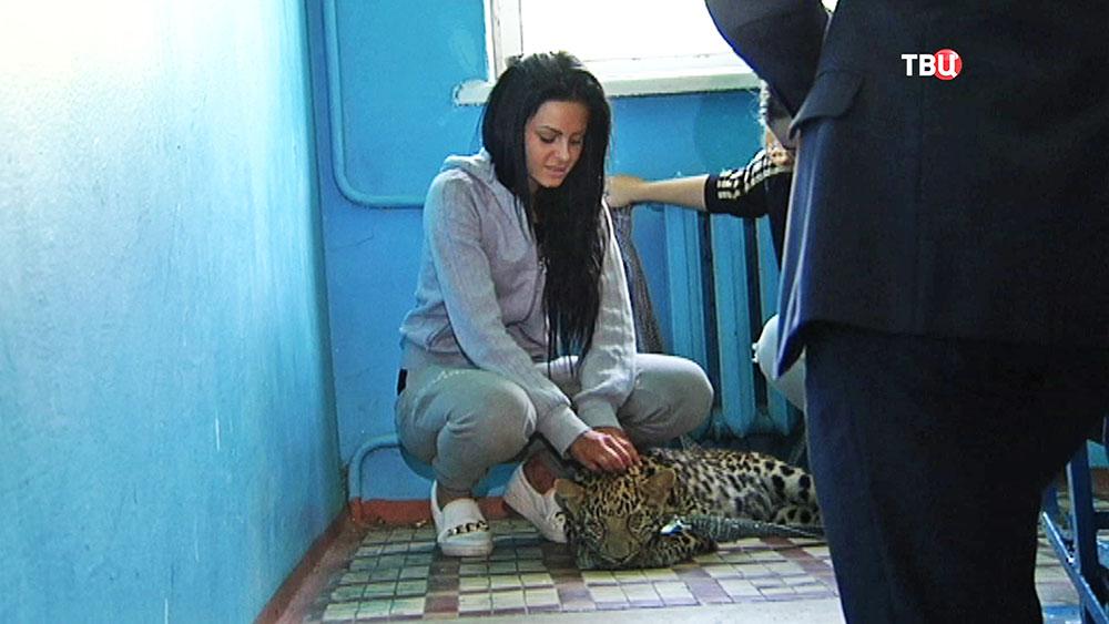 Сбежавший леопард на лестничной клетке