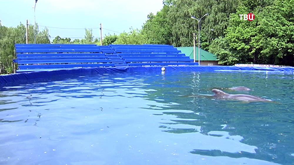 Дельфинарий в Измайловском парке