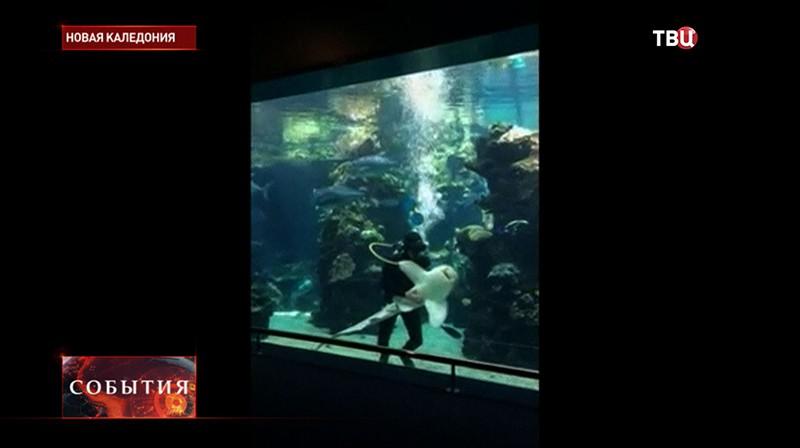 Сотрудник океанариума гладит акулу