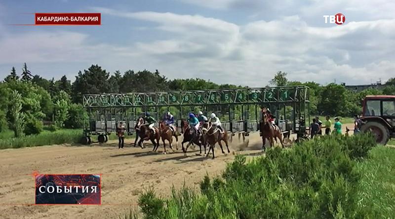 Лошадиные скачки в Кабардино-Балкарии