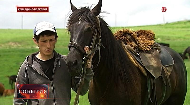 Наездник с лошадью