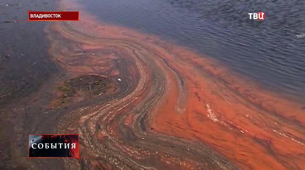 Цветение водорослей в Амурском заливе