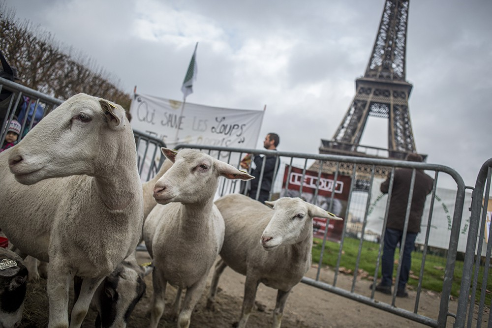 Протест французских фермеров
