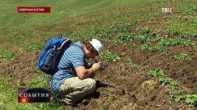 Плантации картофеля