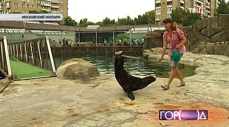 Морской котик в Московском зоопарке