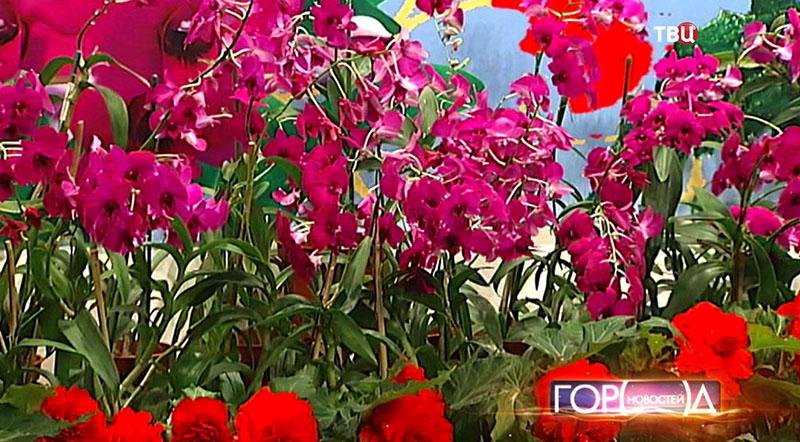 Выставка цветов из КНДР