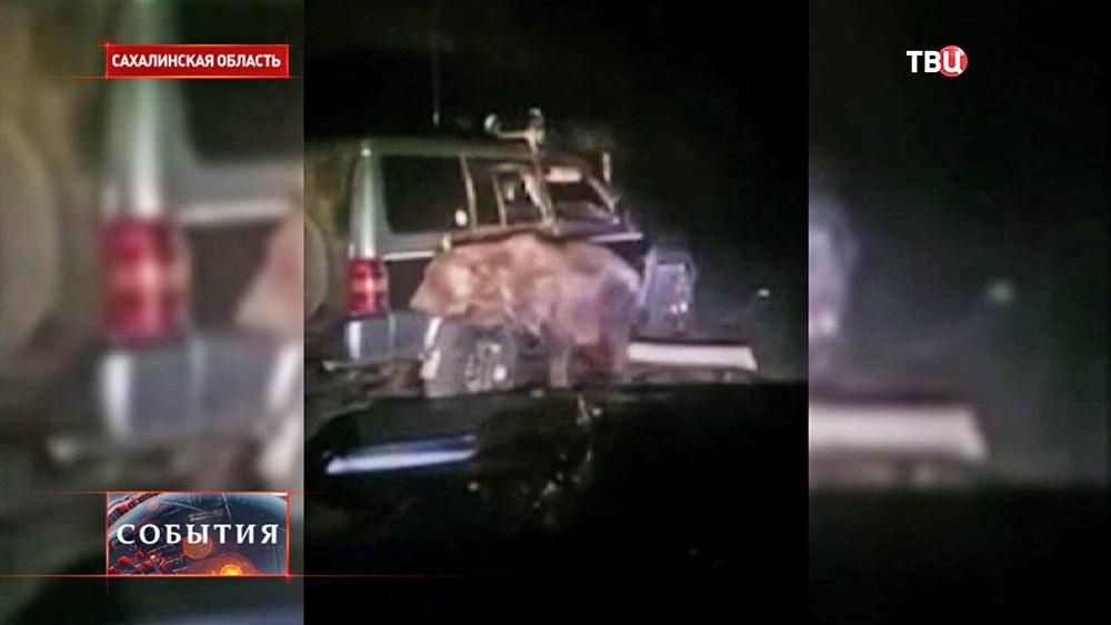 Медведь возле машины