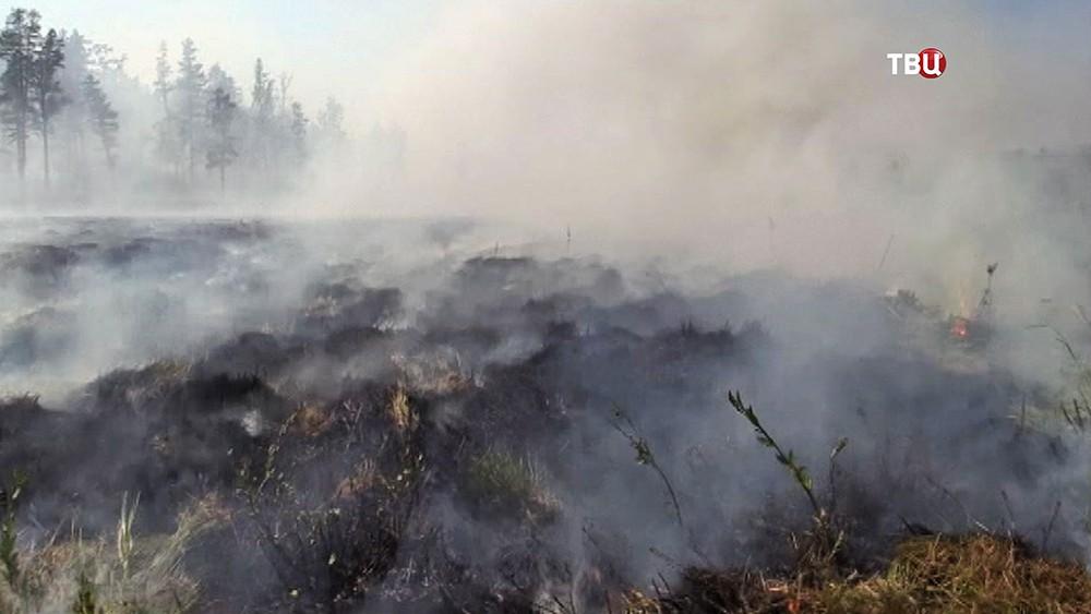 Последствия лесных пожаров