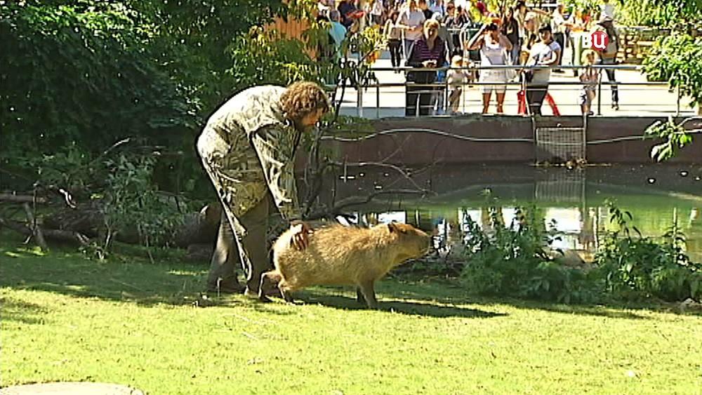 Капибары в Московском зоопарке