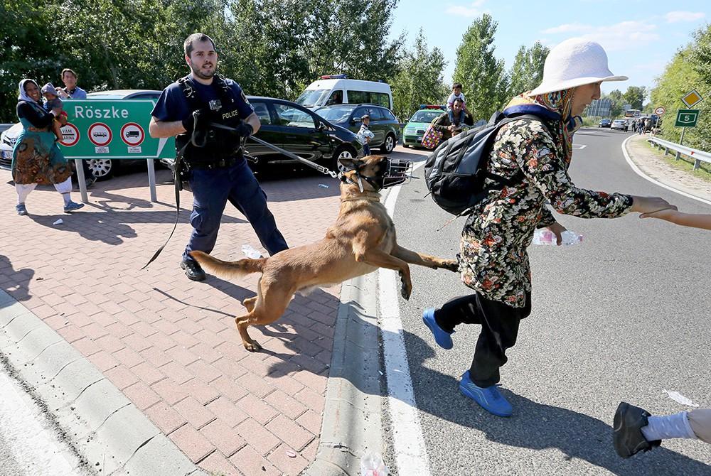 Венгерская полиция задерживает мигрантов