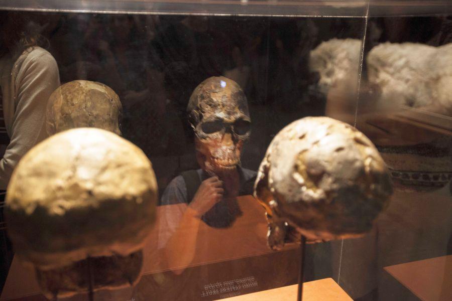 Человеческий череп в музее