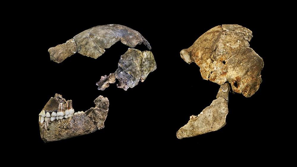 Останки Homo naledi