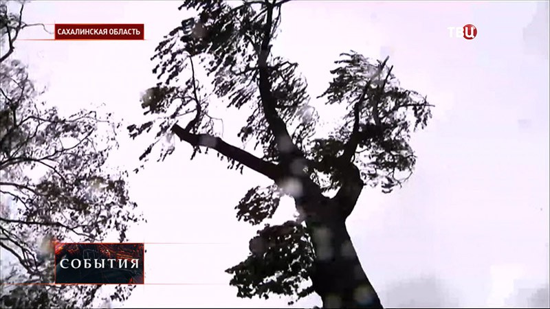 Последствие урагана в Сахалинске