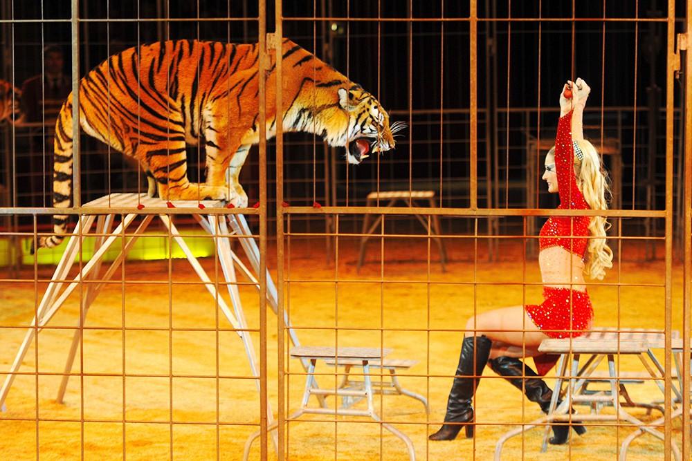 Дрессировщица тигров в цирке