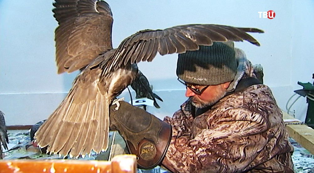 Орнитолог осматривает птицу