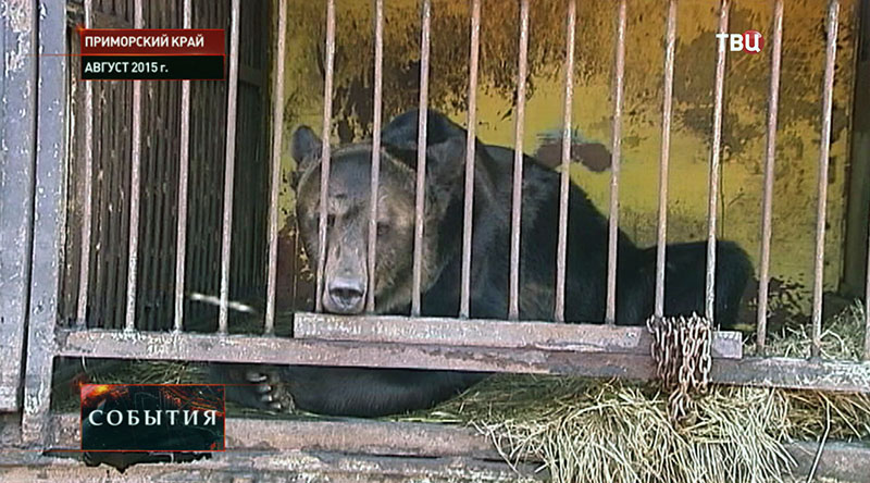 Медведь в Уссурийском зоопарк