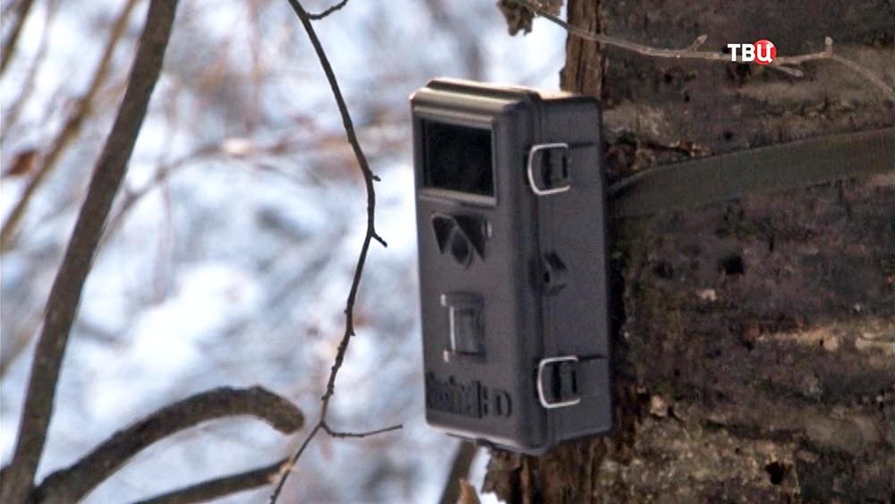 Фотоловушка в лесу