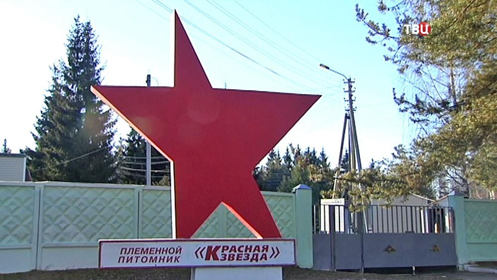 """Кинологический центр """"Красная звезда"""""""