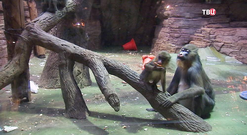 Обезьяны в вольере Московского зоопарка