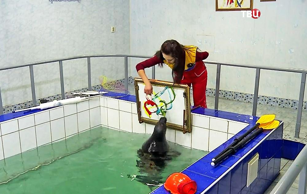 Нерпа рисует картины в бассейне