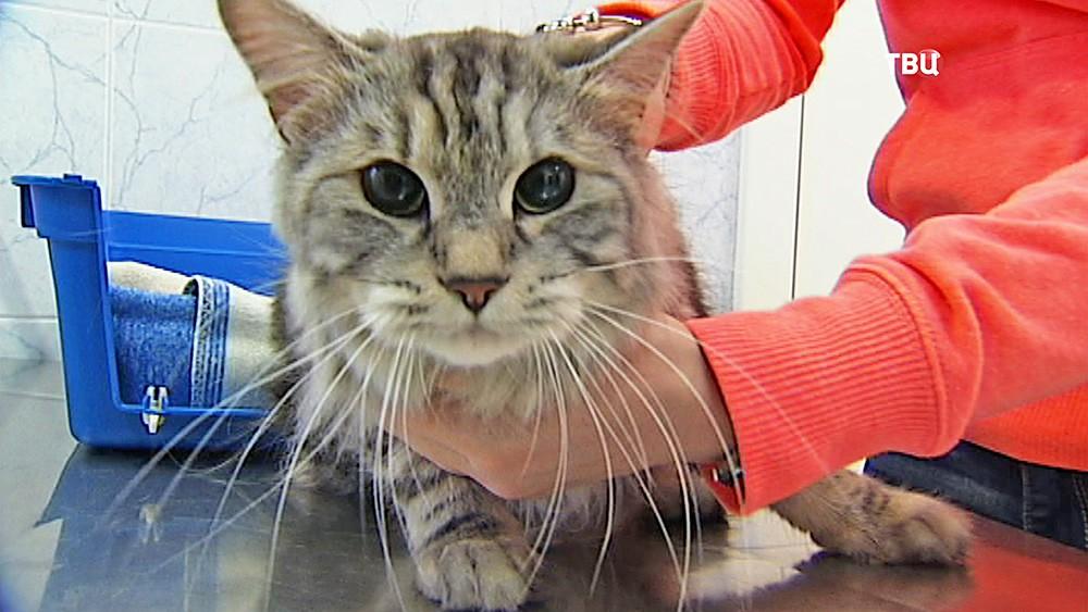 Кот в ветеринарной клинике
