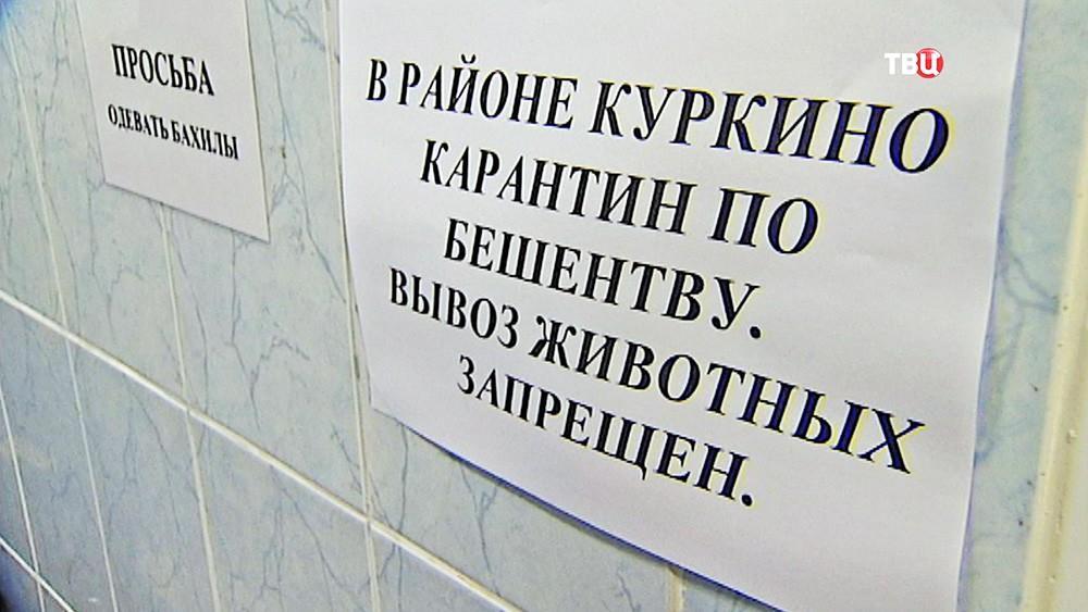 В Куркине объявлен карантин по бешенству