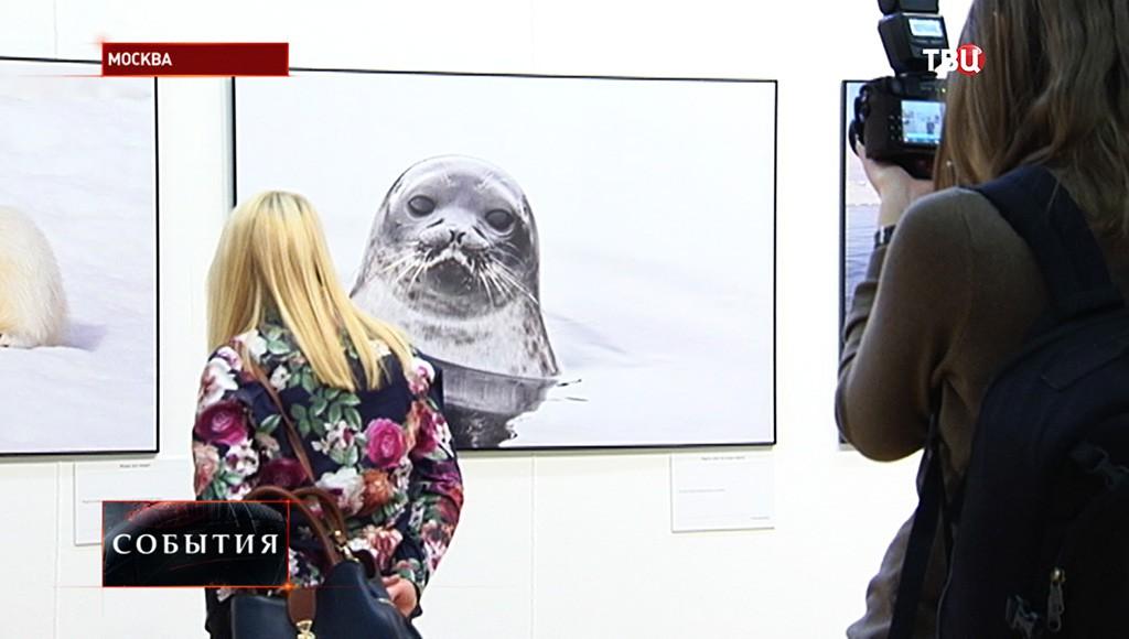 """Экспозиция выставки """"Первозданная Россия"""""""