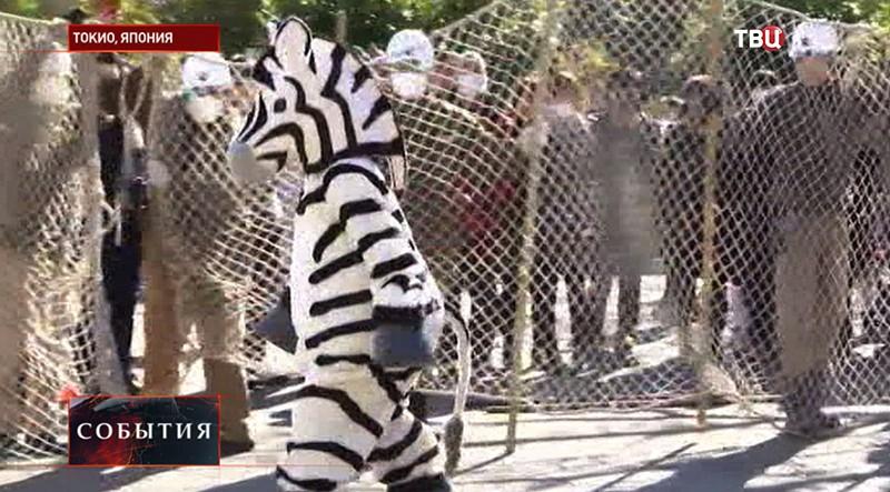 Учения по поимке животных в Токио