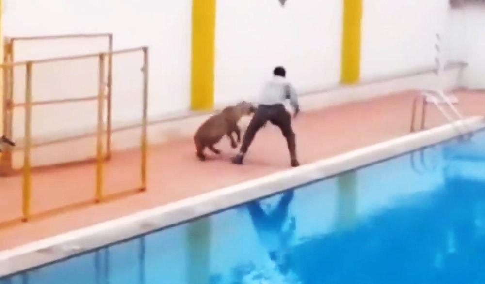 Леопард нападает на человека