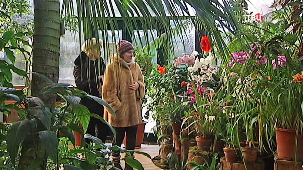 Оранжерея в Аптекарском огороде