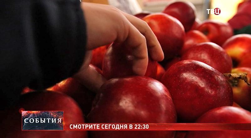 """Смотрите в 22:30 специальный репортаж """"Запретный плод"""""""