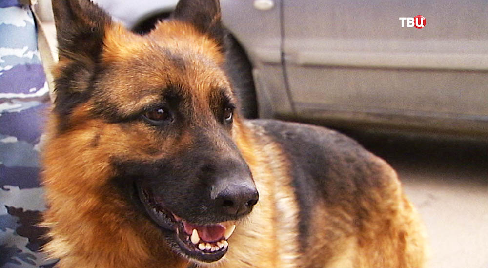 Собака, которую спас сержант полиции Александр Шевцов