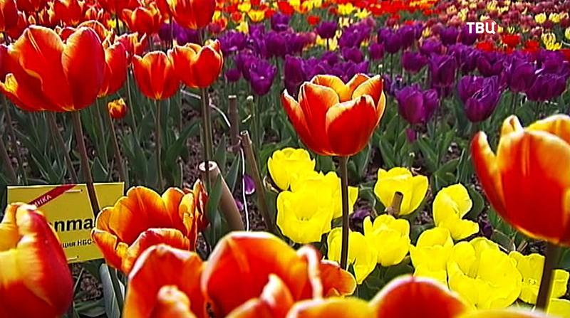 Весенний Парад цветов в Крыму