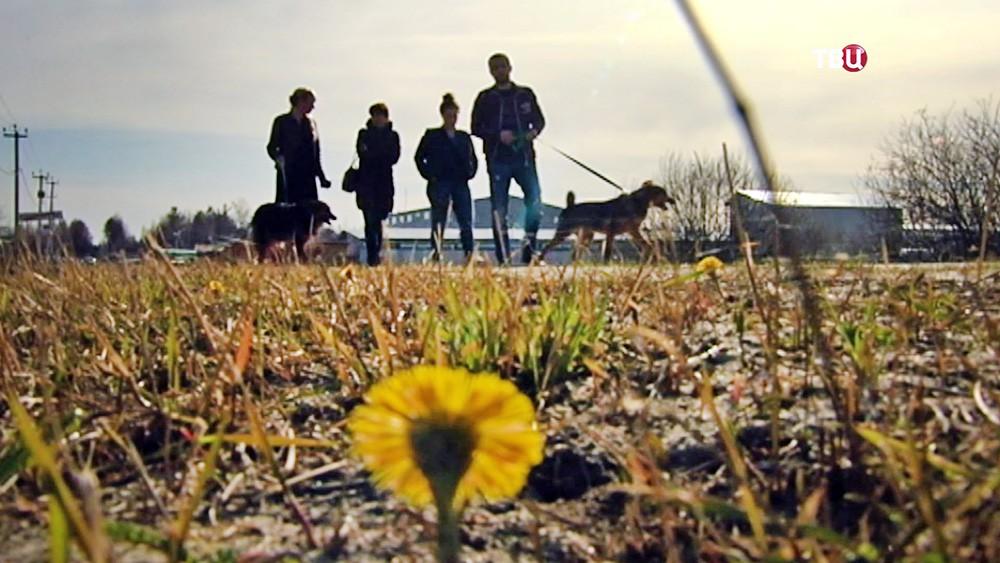 Люди гуляют с собаками