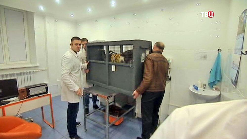 Козлу Тимуру в Москве подают ресторанную еду