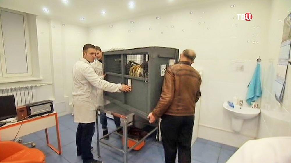 Козла Тимура доставили в ветеринарную клинику