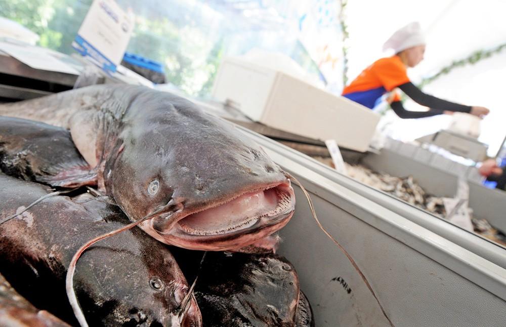 """Торговля рыбой на фестивале """"Рыбная неделя"""" в Москве"""